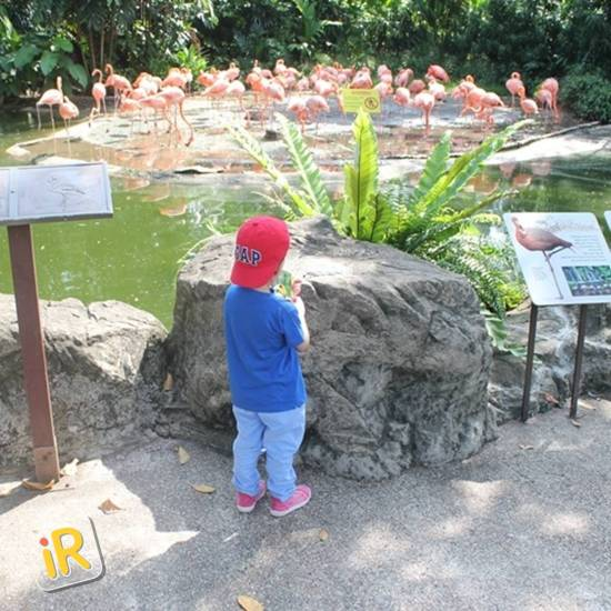 How to plan an amazing holiday in Singapore - Instareview - Jurong Bird Park 02