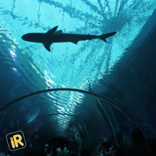 How to plan an amazing holiday in Singapore - Instareview - Sea Aquarium