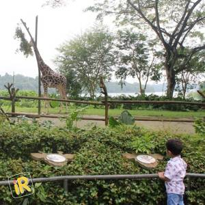 How to plan an amazing holiday in Singapore - Instareview - Singapore Zoo